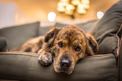 Распространенные болезни собак