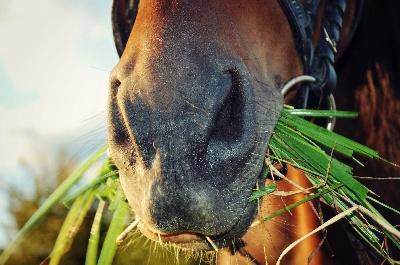 Кормление лошадей рацион, нормы, порядок кормления