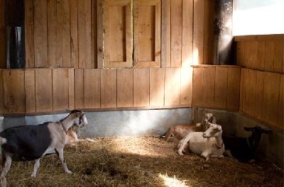 Помещения для коз
