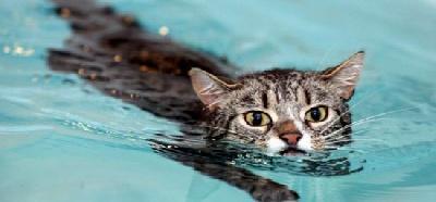 Как приучить кота к воде?