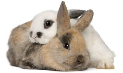 Болезни кроликов: причины, виды, симптомы, лечение