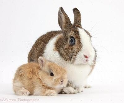 Можно ли давать кроликам картошку?