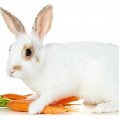 Можно ли давать кроликам морковь и ее ботву?