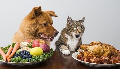 Как реагирует организм животного на изменения в питании
