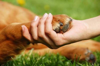Ложные утверждения владельцев домашних животных
