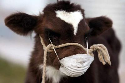 Опасная любовь к животным или инфекция бруцеллез