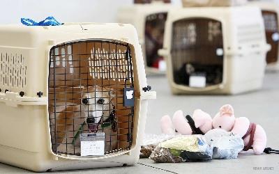 Правила перевозки домашних животных внутри ЕC и за его пределами