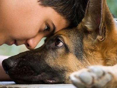 Что нужно знать, перед тем как завести собаку