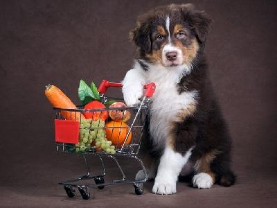 Какие овощи полезны для собак