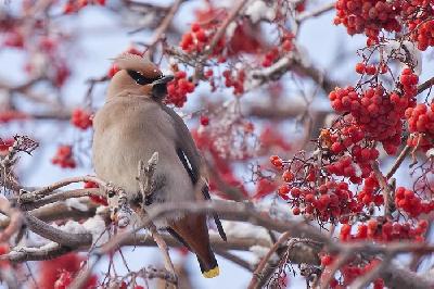 Куда улетают зимовать птицы?