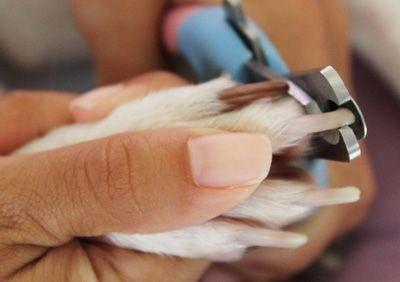 Правильный уход за когтями собаки