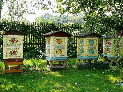 Выбор улья для пчёл