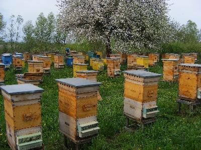 Ветеринарно-санитарные правила содержания пчел