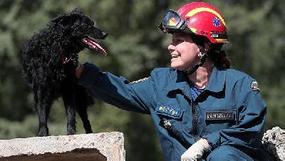 Героические поступки собак со всего мира