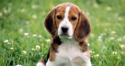 Тонкости стерилизации собак
