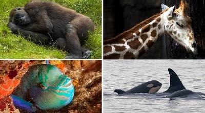 10 интересных фактов о том, как спят животные