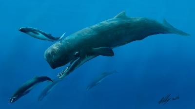 Титаны океана – кашалоты