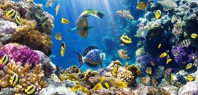 30 интересных фактов о рыбах